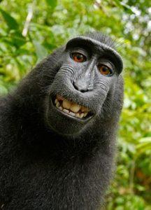 golf pranks laughing monkey